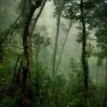 Warhammer Quest Travelling Hazard - Heavy Forest