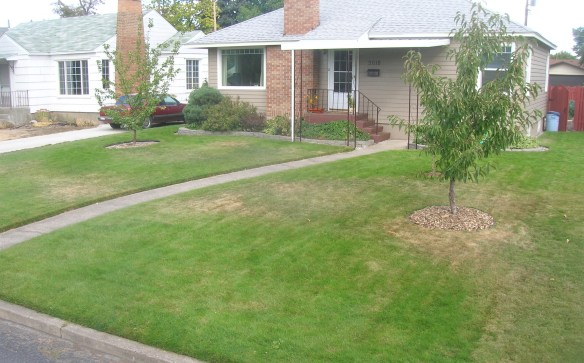 My front yard before I changed it