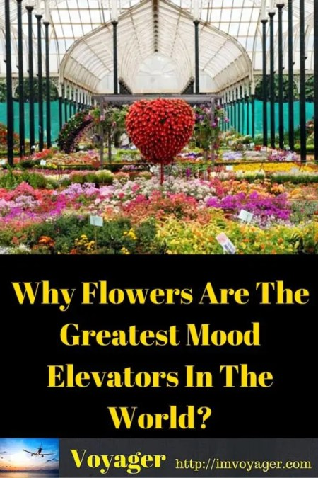 Why Flowers Are The Greatest Mood Elevators In The World- Voyager Travels