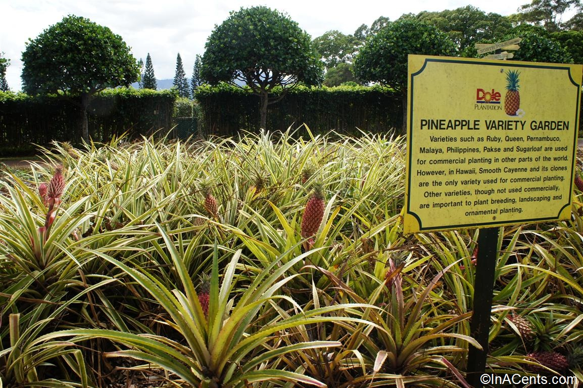 Touring The Dole Plantation Via The Pineapple Express Train Inacents Com