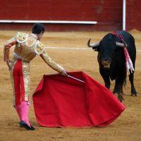 Boğalar renk körüdür, kırmızı rengi göremezler. Boğayı matadorun tuttuğu beze saldırtan aslında bu bezin sallanması ve boğanın bu şekilde kışkırtılmasıdır.