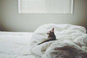 姿が見えなかったので探しに行くと、寝室で黄昏中でした。