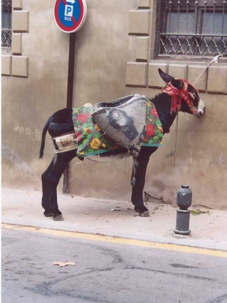 A colourful donkey