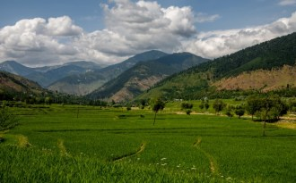 Sweeping vegetation changes projected in Kashmir Himalayas due to global warming