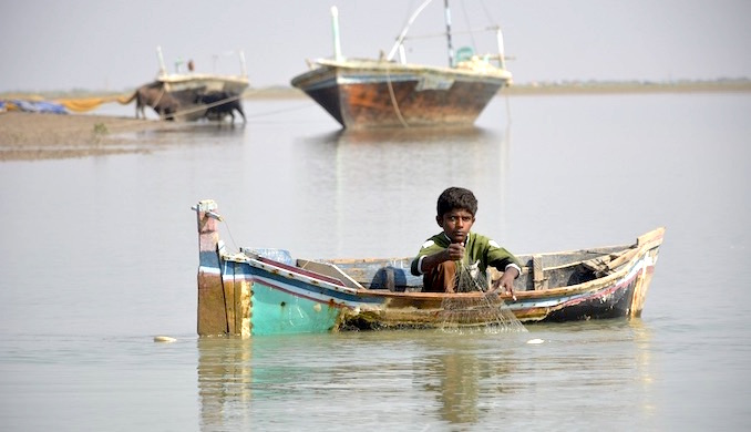 Young fisherman Ali spreads his net in Hajamaro Creek of the Indus delta in the hope of catching Palla [image by Amar Guriro]