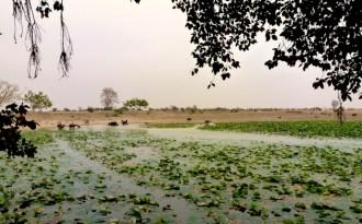 Bringing water back to Bundelkhand