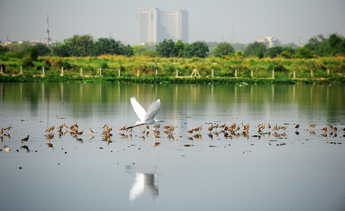However polluted, the Yamuna is still home to many birds