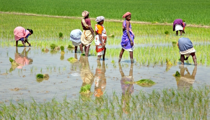 Sowing paddy in Tamil Nadu. (Photo by Michael Foley)