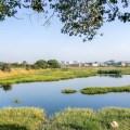 Wetlands retreat before onslaught of urbanisation