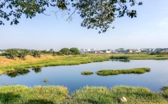 Wetlands retreat before onslaught of urbanisation