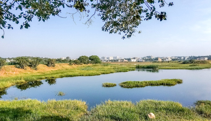 Bengaluru's wetlands have shrunk due to rapid urbanisation. (Photo by Mike Prince)