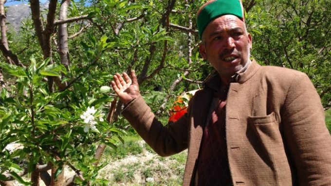 An apple farmer in Kinnaur with his trees [image by Manu Moudgil]