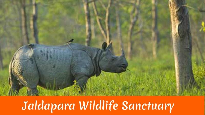 Jaldapara Wildlife Sanctuary..