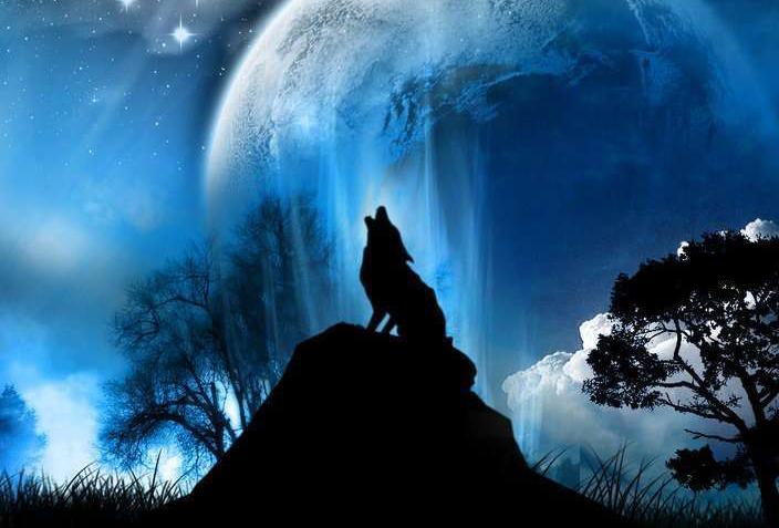 Iphone Wolf Wallpaper From Lone Wolf To Pack Member Indie Dev Storiesindie Dev