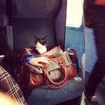 Le vide du train