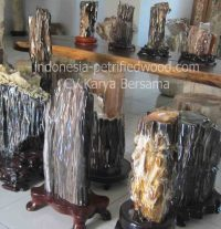 petrified wood wholesaler