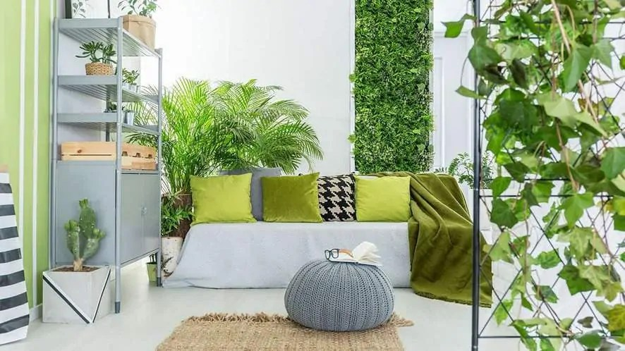 Indoor Plants For The Office 20 Low Maintenance Indoor Plants To Brighten Your Home Or Office
