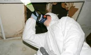 mold inspection in emeryville