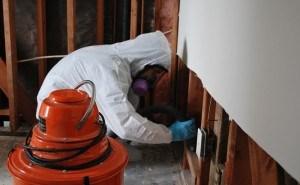 San-Fernando-Mold-Removal-Remediation-Professional
