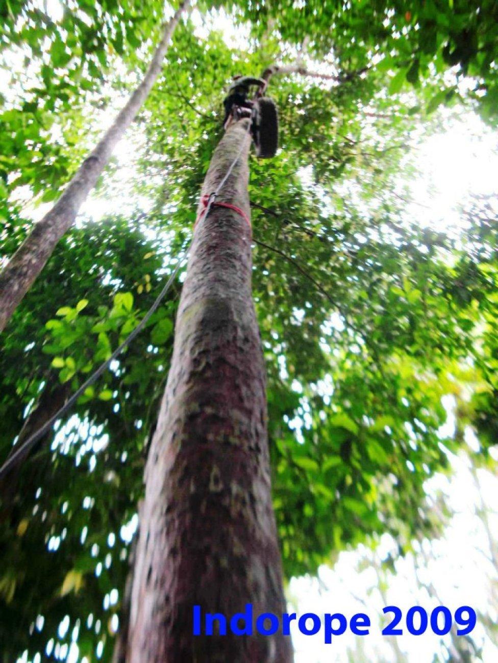 Advanced Safety Tree Climbing Training 11