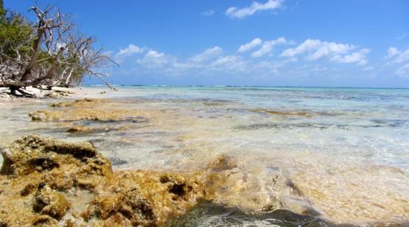 Spanish Point Barbuda 9