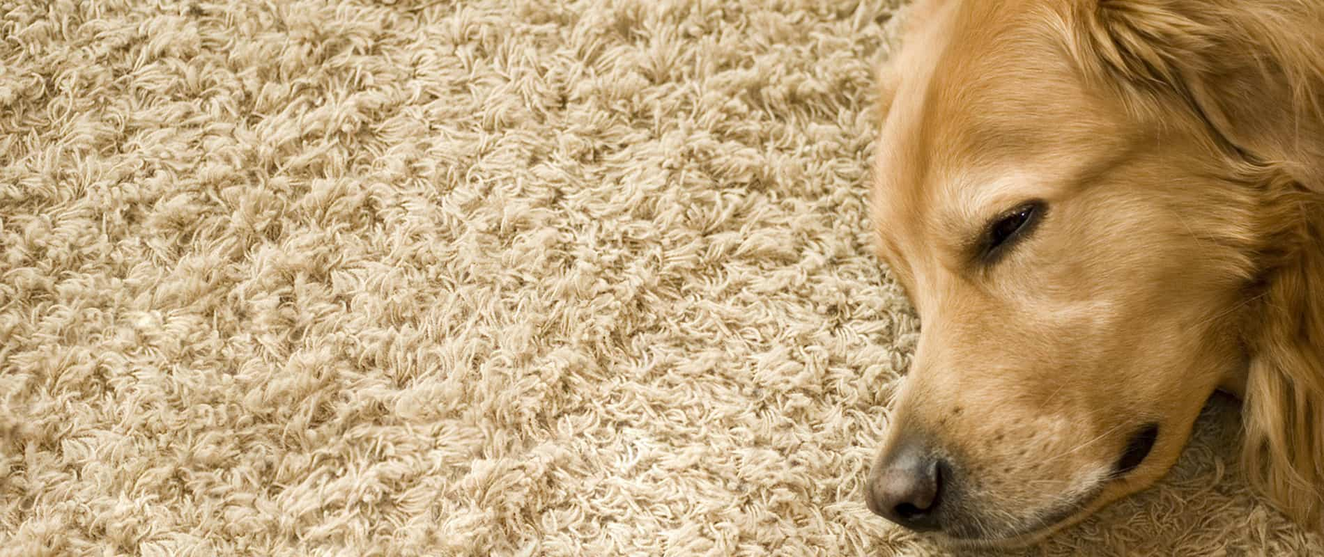 Biologische Reinigungsmittel Best Pet Odor And Stain Removal Cleaning Indianapolis