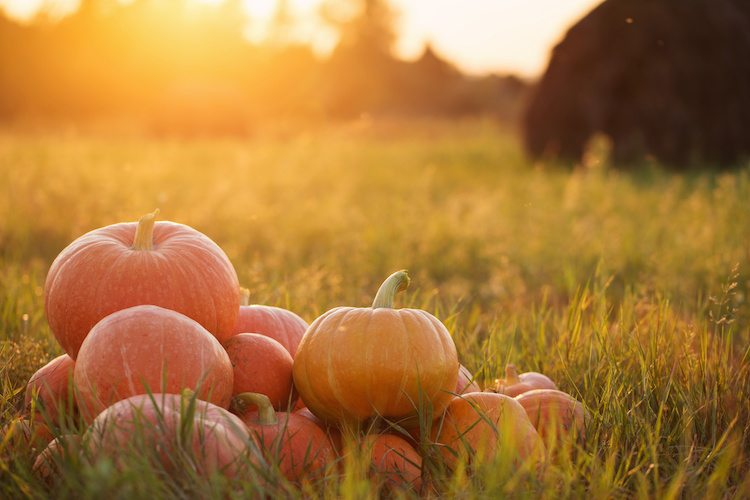 8 Activities for Fall Fun in Indy Indy\u0027s Child Magazine