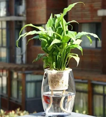 十種最適合室內種植的水養植物