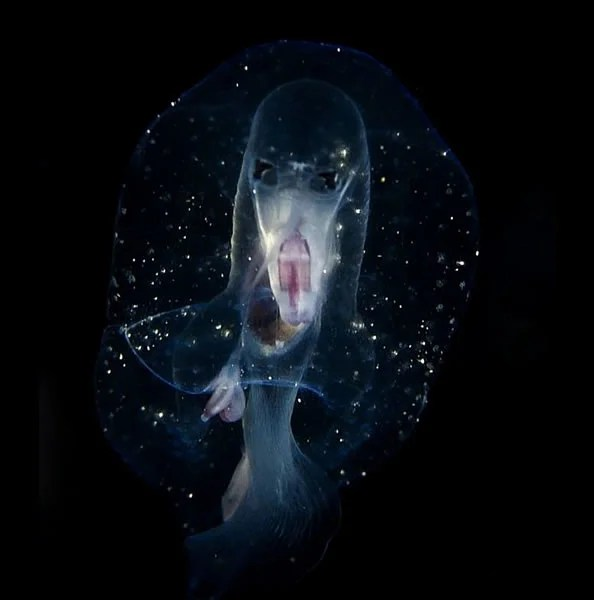 幾乎隱形 通體透明 攝影師意外拍攝到「鬼臉生物」