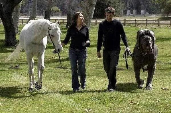 女孩不知這隻受傷的狗是什麼品種就帶回家,網友驚呼這你也敢收!