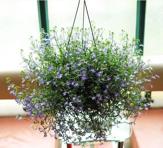 家居養花:花卉也喜歡喝酒,妙用啤酒讓你的花卉更加好看!