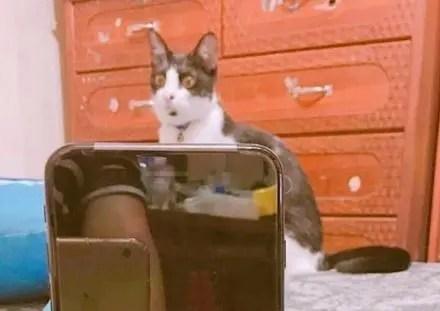 主人在逗貓的時候,故意把逗貓棒搖得很快