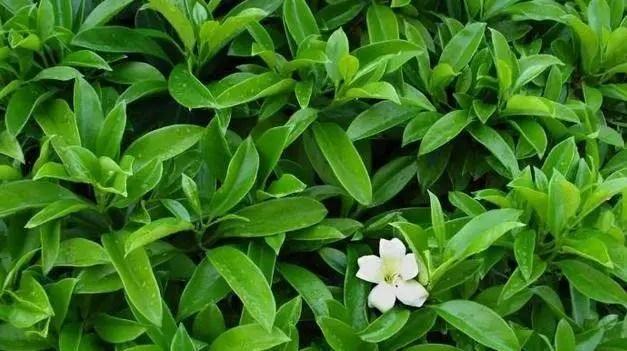 這幾種常見的植物可以吸走室內的毒氣哦!
