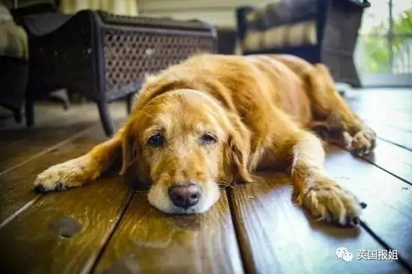 神奇的腦洞,在狗狗眼裡人類都是永生的精靈?