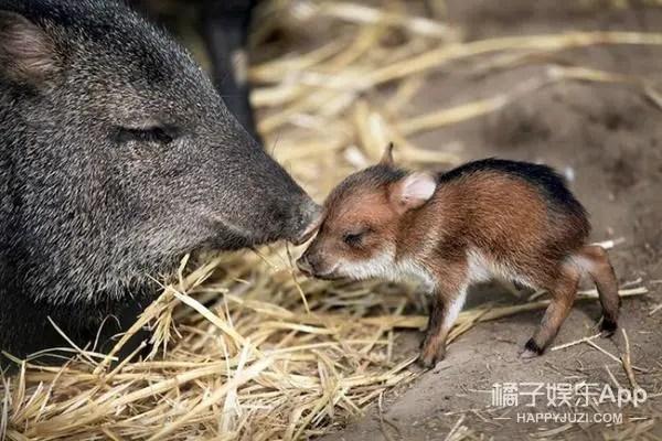 這些動物還是小隻的時候也太可愛了