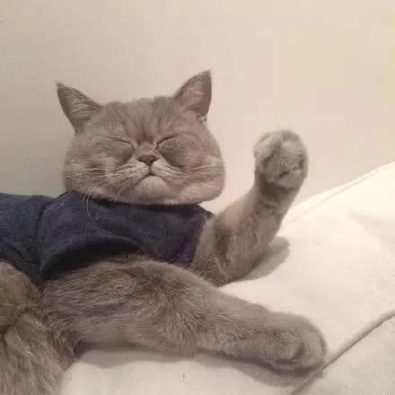 一枚胖胖的大臉貓,每天都在為臉大而煩惱