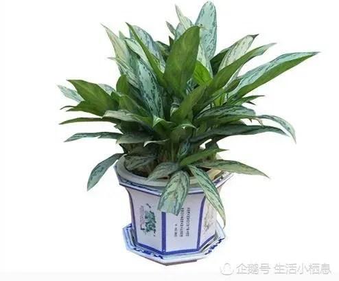 室內綠化必備植物,能清除有害物質的植物