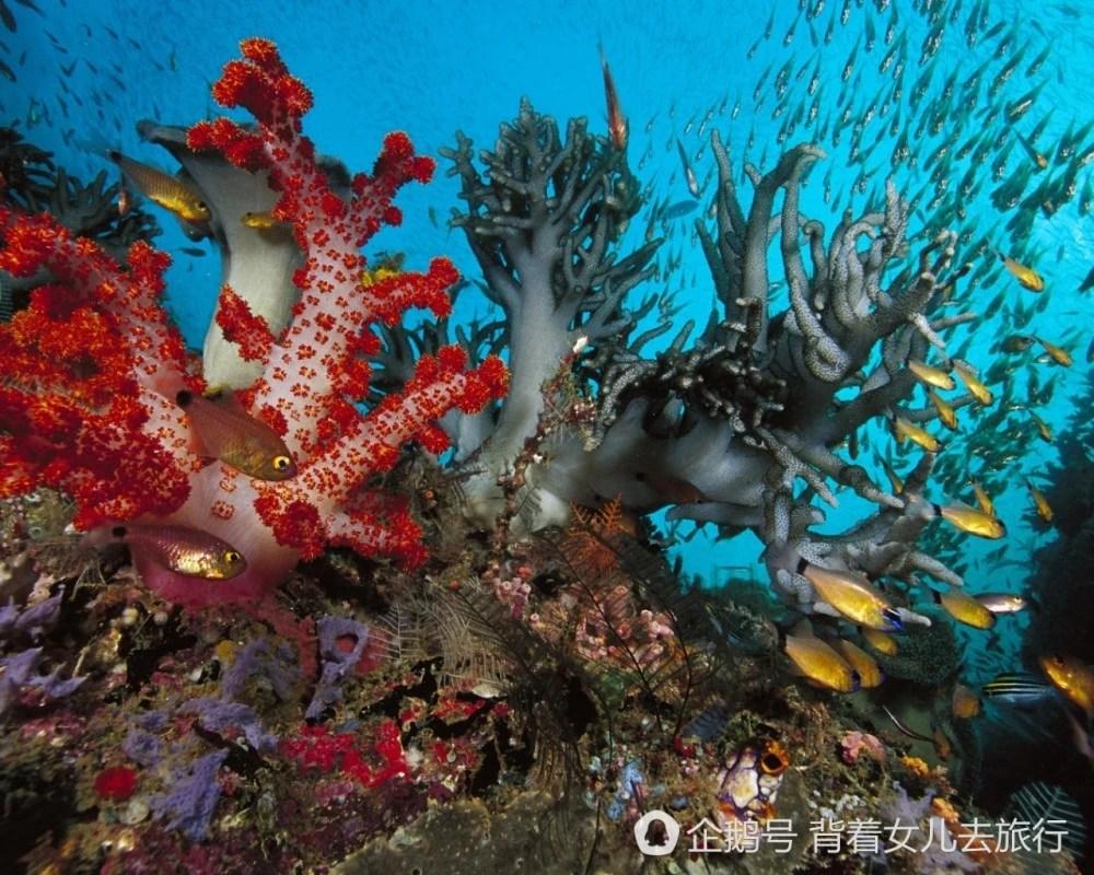 世界上最大的一片海,面積比半個中國還大,卻被稱為「鯊魚之海」