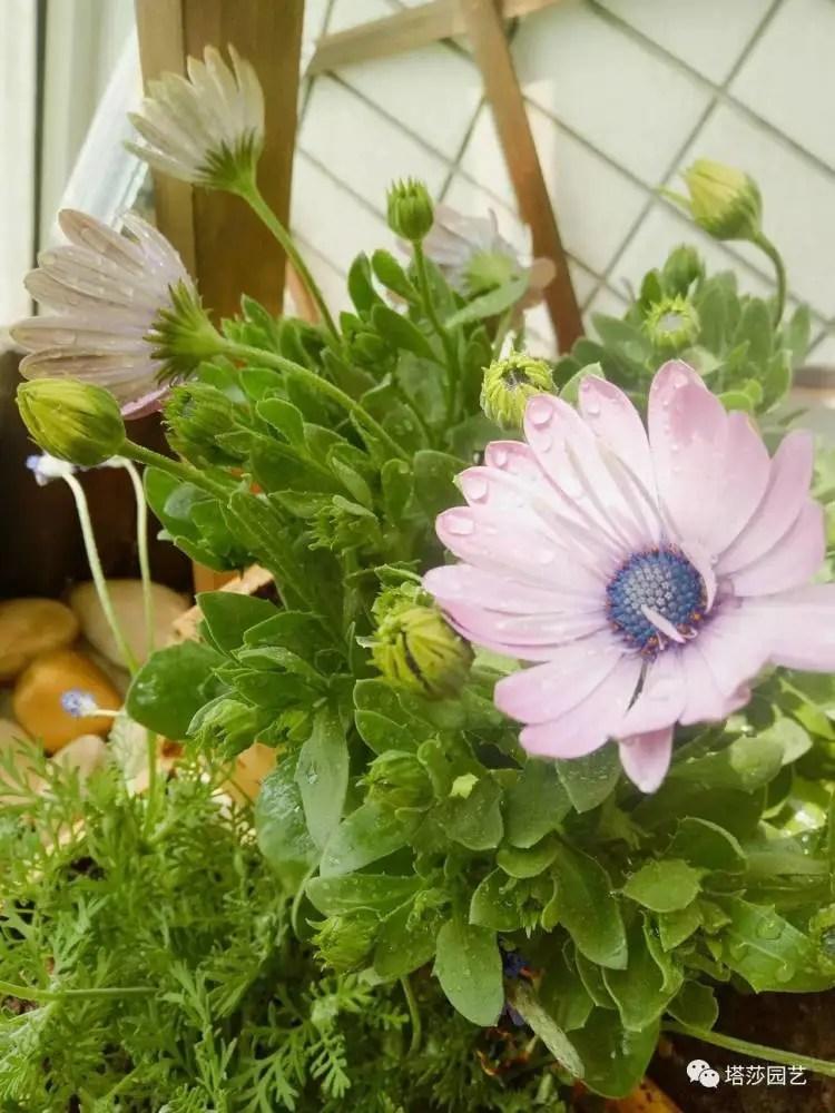 宓兒的花草生活,與綠植相伴,與茶藝結緣