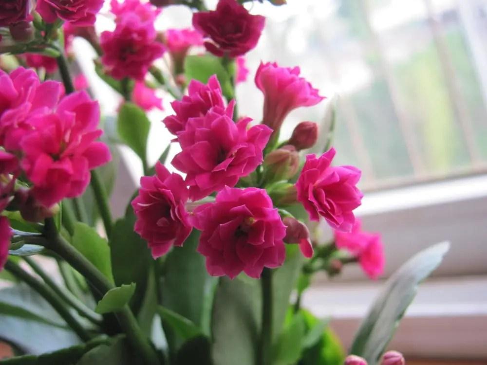 這5種植物適合室內種植,新手也能養活!
