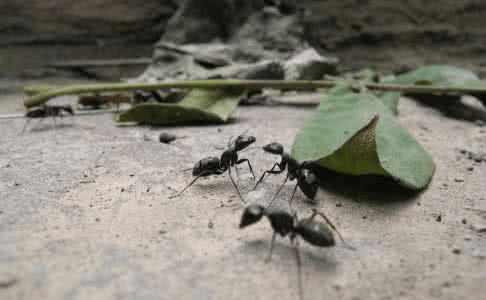 4維生物在注視著人類?我們卻不知,就像螞蟻看不到人類一樣