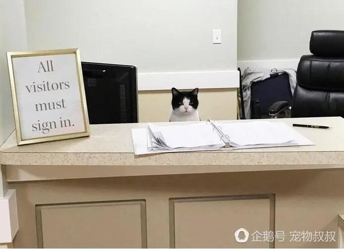流浪猫咪强闯养老院,最终得到了一份工作,大家都离不开它了