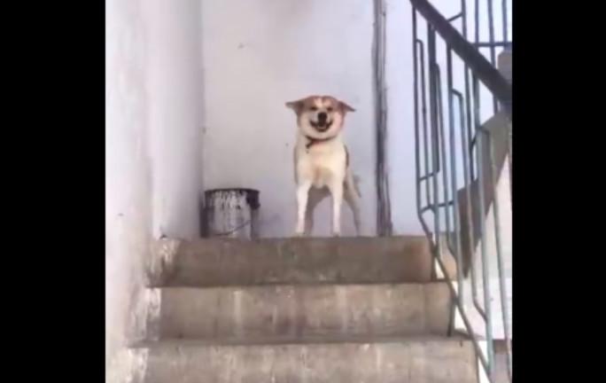 在屠宰場買了一隻狗,帶回家後,主人每天都很感動!