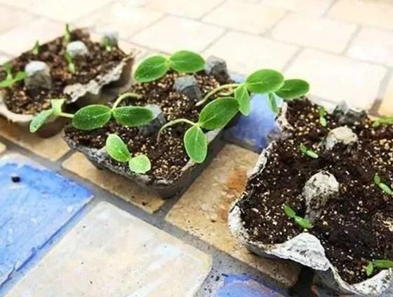 使用這樣的蛋殼作花肥,讓你的花卉一年四季都綠油油!