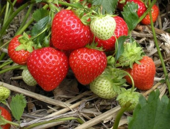 4季養生該吃什麼?夏養肝,秋養肺,春天這些你吃了嗎?