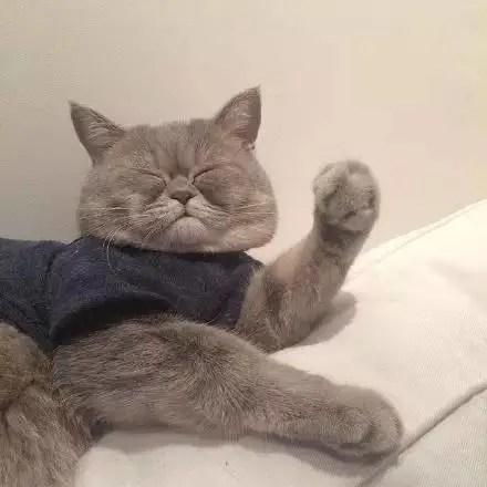 一枚胖胖的大臉貓,每天都在為臉大而煩惱,哎!