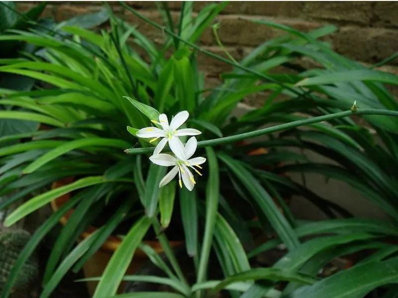 家居養花:4招實現盆栽花卉的無臭施肥方法,綠色天然!