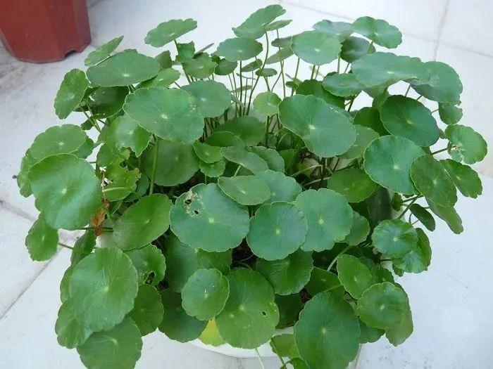 家居養花:非常適合新手養護的6種花草,養護簡單!