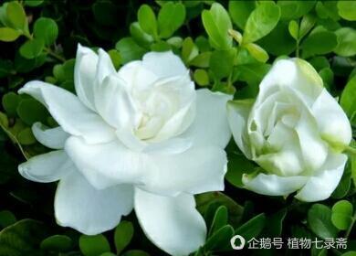 老園丁乾貨分享,盆栽花卉度春指南,讓家裡的花花們春意盎然!
