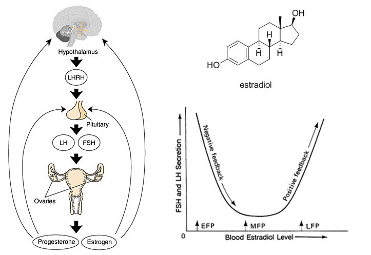 estradiol the infertile chemist
